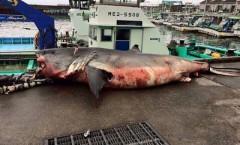 もし海でサメに遭遇したら?